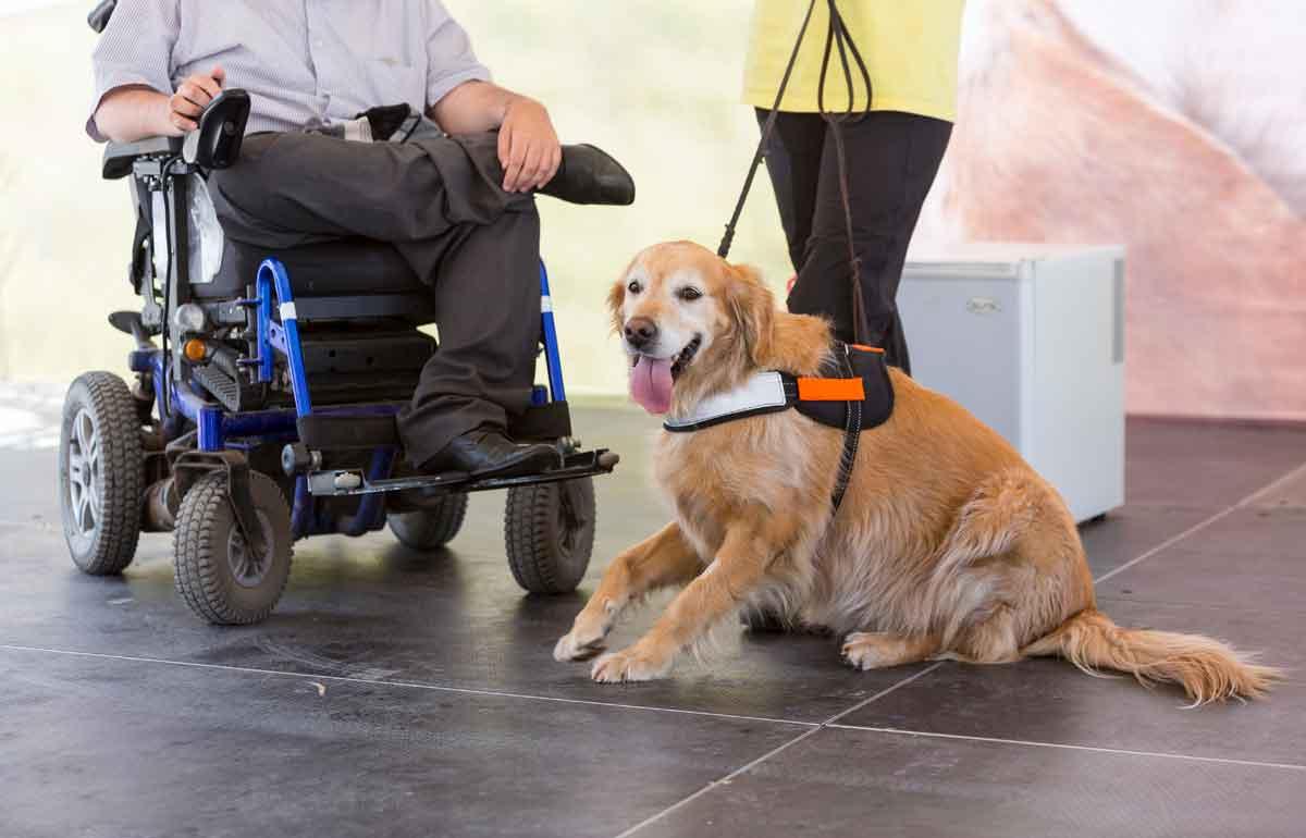 hulphond voor mindervalide